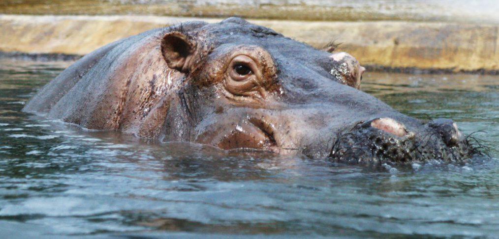 Ssst. een nijlpaard in de kamer!